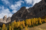 larch trees near Sella Pass