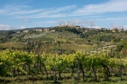 vineyards and olive groves, San Gimignano