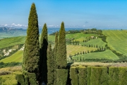 cypress lined road, Val d'Orcia