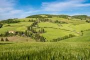 cypress lined road Monticchiello
