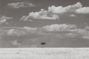 The Mara, a beautiful, vast grassy savannah.