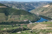 Vineyards along the Douro River above Pinhao