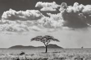 Acacia and hills, Serengeti